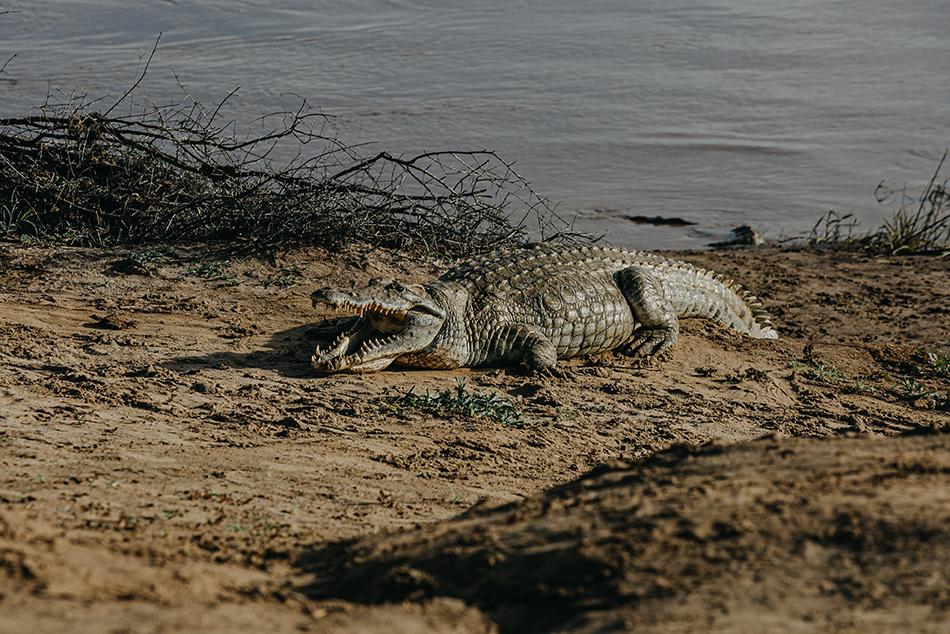 Malaika Safari